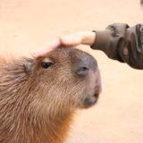【神戸ポートアイランド】動物が近すぎ!「神戸どうぶつ王国」デートに行ってきました