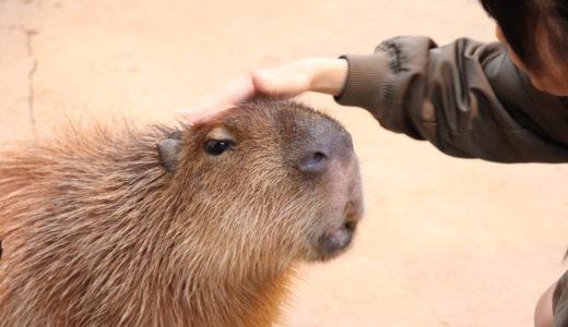 【レビュー】動物が近すぎ!神戸どうぶつ王国に行ってきました